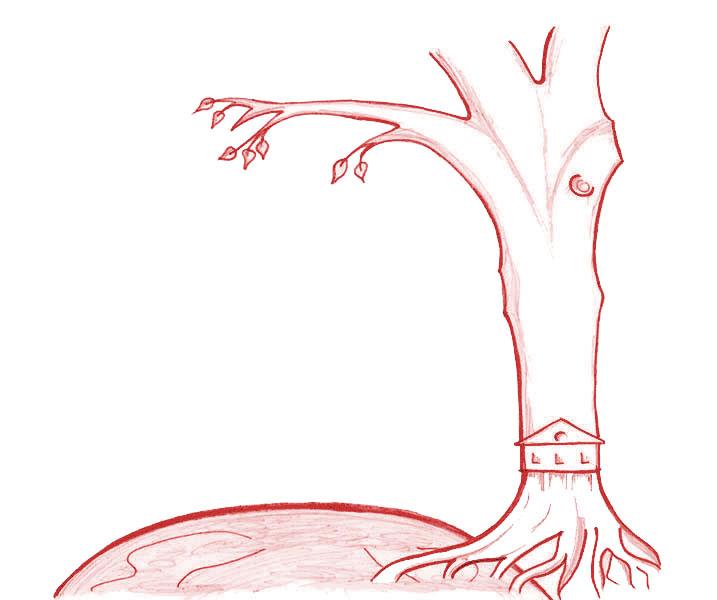 """""""Plants 4 Our Future"""", la référence pour vos achats respectueux du développement durable"""